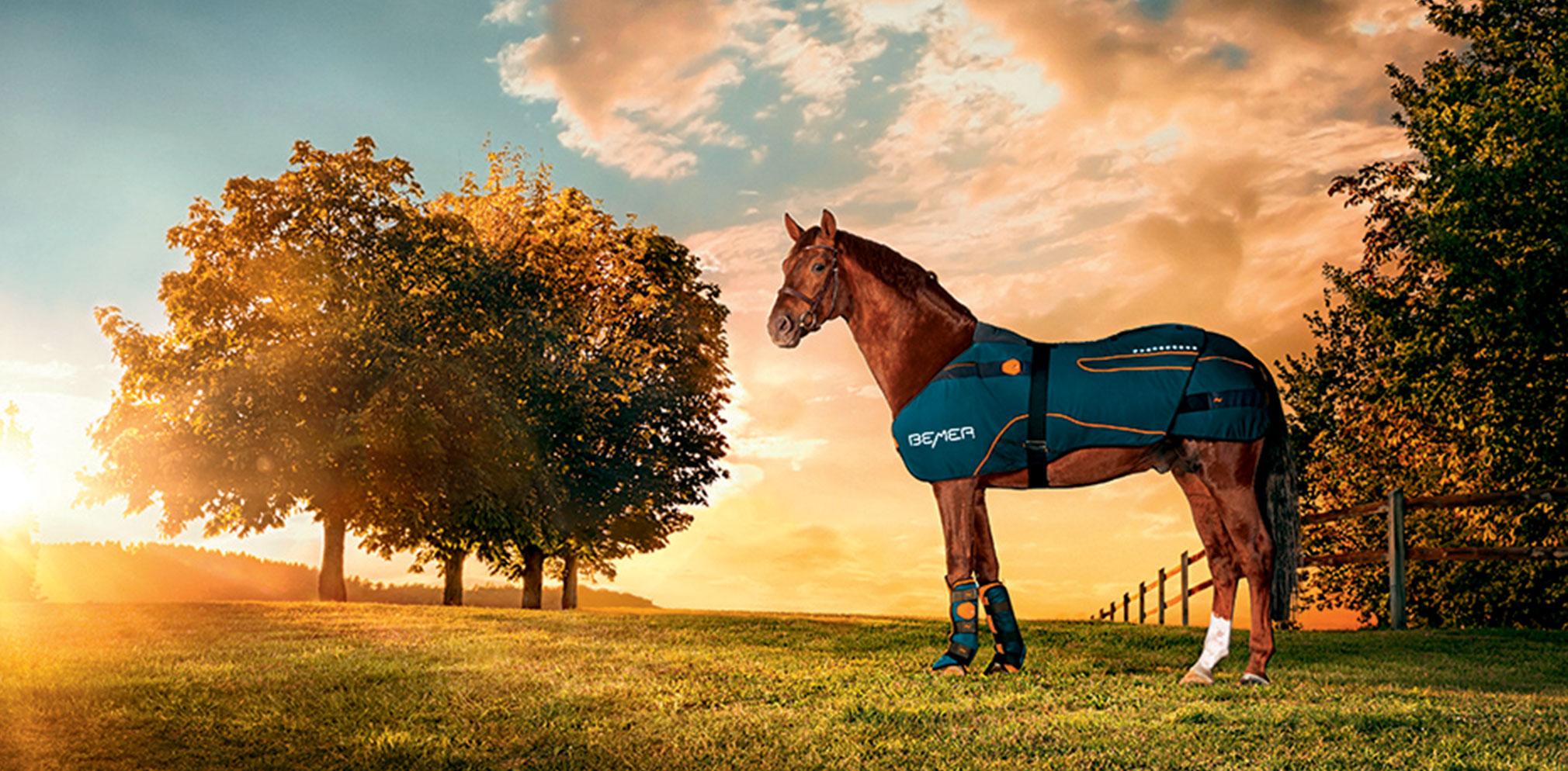 Horse Set BEMER